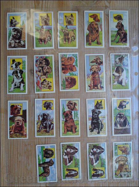 Image for VIMS - DOG CARDS  PUPPIES  A SERIES OF 50  Cigarette Cards