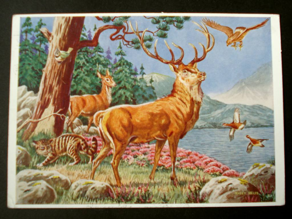 Image for ANIMALS OF THE SCOTTISH HILLS